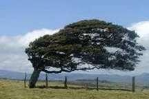 پیش بینی هواشناسی از وزش باد شدید در خراسان جنوبی