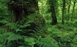 گیاهان مهاجمی که جنگل های هیرکانی را نابود می کنند