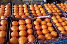 توزیع میوه شب عید در بروجرد آغاز شد