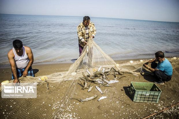 رئیس سازمان شیلات: بیش از ظرفیت در حال استفاده از منابع دریایی هستیم