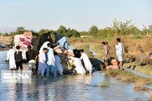 هلال احمر یزد خواهان جمع آوری کمکهای مردمی برای سیل زدگان سیستان و بلوچستان شد