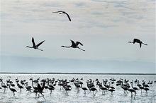 کلیپ نشنال جئوگرافیک به مناسبت روز جهانی پرندگان مهاجر