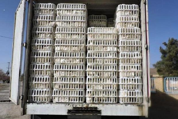11 محموله مرغ زنده قاچاق در دهلران توقیف شد