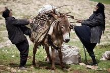 معاون منابع طبیعی: عشایر در 53 سامانه همدان مستقر می شوند