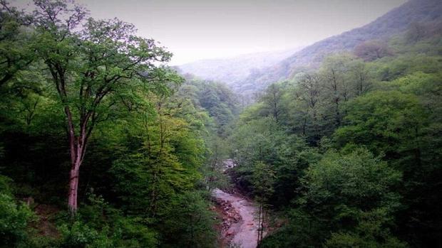 آخرین خبر از پروندههای وقف جنگل ها در آقمشهد و کوه دماوند
