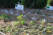 پارک شفابخش با 30 گونه گیاهی در همدان احداث می شود  افزایش فضای سبز رویکرد شورا