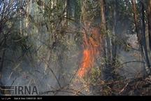 392 تعاونی برای مقابله با آتش سوزی جنگل های ایلام تشکیل شد