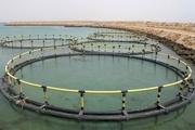 تولید چهارهزار تن انواع ماهی در استان قزوین