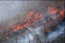 1.5 هکتار از اراضی کشاورزی یله گنبد در آتش سوخت