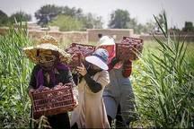 زنان روستایی اردبیل پیشگامان تولید محصولات سالم هستند