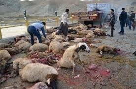 تلف شدن 18 راس گوسفند در تایباد