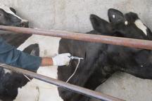 دامهای حاشیه مناطق حفاظت شده استان مرکزی واکسیناسیون شدند
