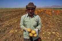 تخصیص 35 میلیارد ریال مشوق برای صادرکنندگان محصولات کشاورزی کردستان