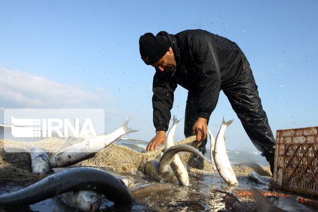 تولید سالانه ۱۵ هزار تن انواع ماهی در آذربایجانغربی