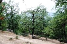 15 منطقه با تنوع زیستی بالا در جنگلهای هیرکانی شناسایی شد