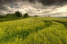 کشاورزان برای کاهش خسارت وزش بادتمهیدات لازم را انجام دهند