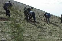 6 هزار اصله نهال طی هفته منابع طبیعی در بوکان کاشته می شود