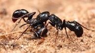 با این ترفندها شر مورچهها را از خانه خود کم کنید