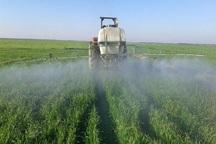 آغاز مبارزه با آفت سن در 90 هزار هکتار از اراضی کشاورزی قزوین