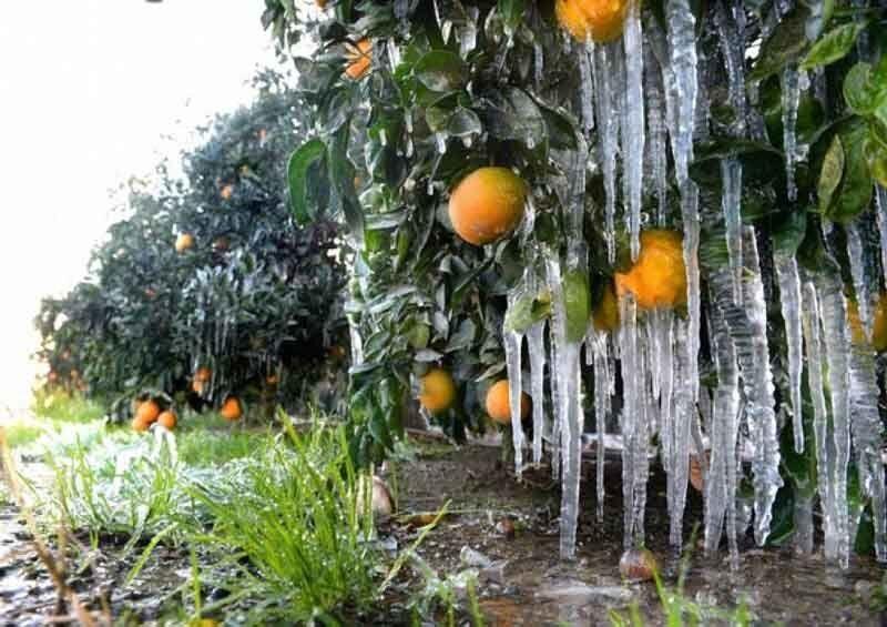 هشدار جهاد کشاورزی زنجان نسبت به تغییرات جوی
