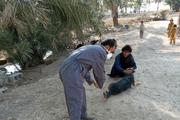 بیشاز ۵٠٠ قلاده سگ علیه هاری در ایرانشهر واکسینه شدند