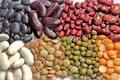 تولید هشت هزار تن حبوبات در اردبیل