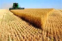 اختصاص657 میلیارد ریال اعتبار برای حل مشکلات واحدهای تولیدی کشاورزی  کاهش 27 درصدی بارش در زنجان