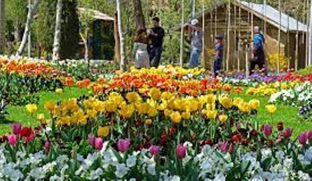 جشنواره لاله های کرج نیمه دوم فروردین ماه برگزار می شود