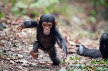 بازی مشترک بچه میمون و کودک انسان