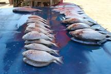 آغاز نخستین برداشت ماهی پرورشی درقفس به مقدار 3 تن در چابهار