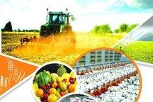 تسهیلات بانک کشاورزی خراسان جنوبی 63 درصد افزایش یافت