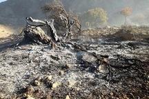 خشک شدن 50 درصد درختان جنگلی شلالدان در کهگیلویه و بویر احمد