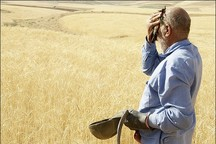 نماینده مردم اهر و هریس در مجلس: کشاورزان منطقه نیازمند حمایت هستند