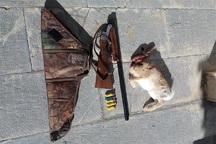 متخلف شکار در قروه دستگیر شد