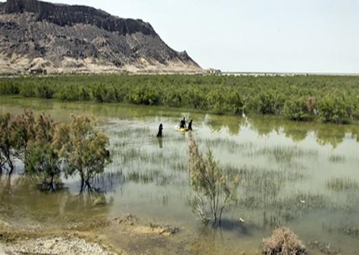 احیای تالاب هامون در اولویت سازمان محیط زیست قرار گرفت