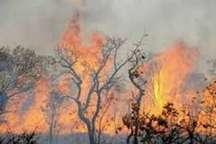 آتش سوزی جنگلهای بویراحمد مهار شد