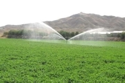 ۱۸۰ هکتار  از زمین های کشاورزی اسلامآبادغرب به سیستم آبیاری تحت فشار مجهز شد