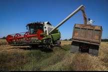 مجوزپرداخت کرایه حمل گندم به سیلوهای خوزستان صادرشد