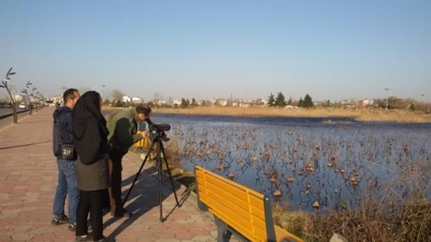 سرشماری افزون بر 192 هزار پرنده در تالاب های گیلان