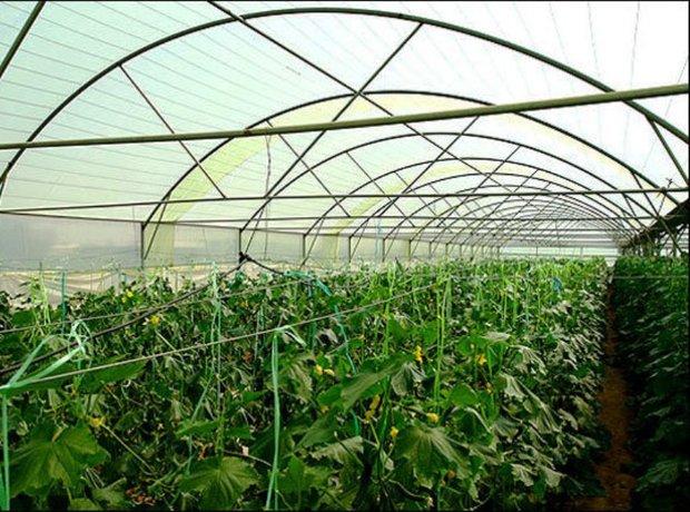 استان تهران در تولید محصولات گلخانه ای کشور پیشتاز است