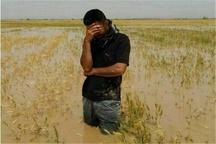 سوء برداشت، علت تجمع کشاورزان سیل زده شهرستان کارون  کشاورزان در زمین هایی مازاد بر سند مالکیت خود زراعت کرده اند