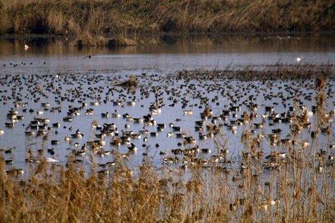 30 هزار پرنده مهاجر وارد تالاب «کانی برازان» مهاباد شدند