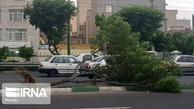 سرعت باد در مازندران از ۸۰ کیلومتر عبور کرد