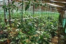 عملیات ساخت شهرک گلخانه ای در بوئین زهرا آغاز شد
